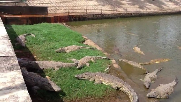 lac a crocodiles